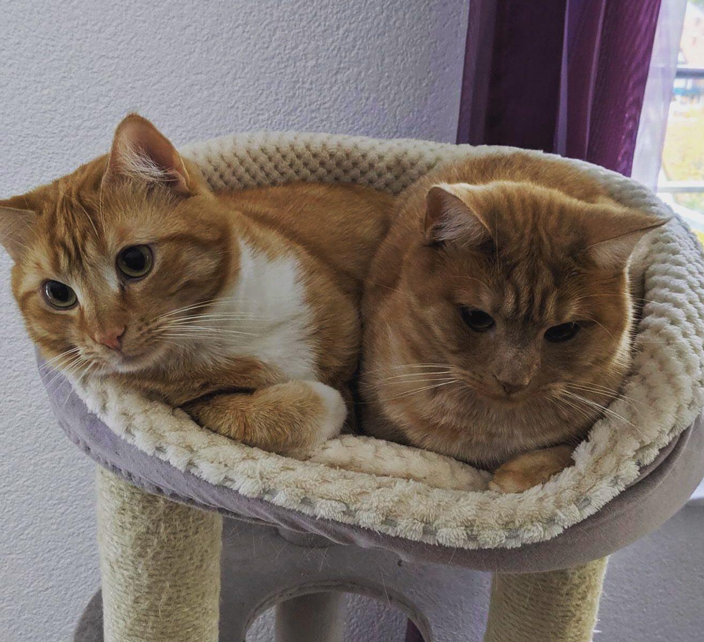 Zwei Katzen in Körbchen