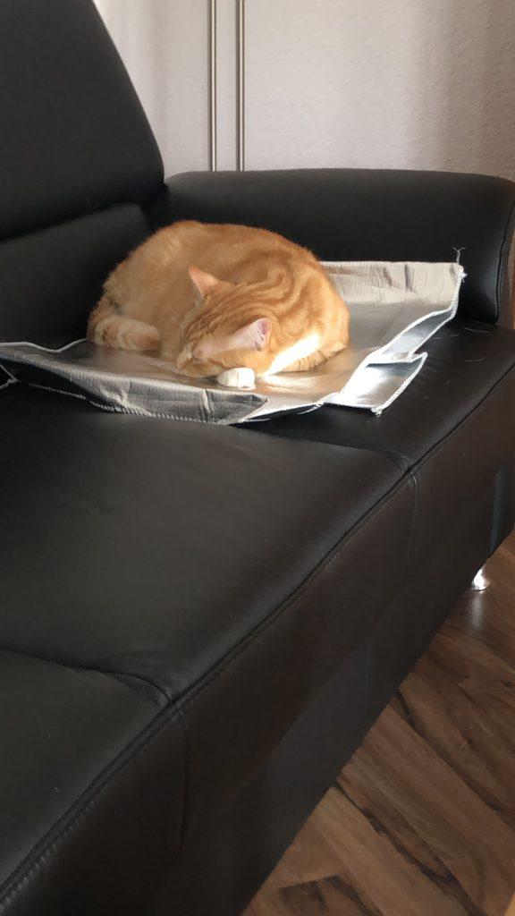 Katze auf Aluminium Decke