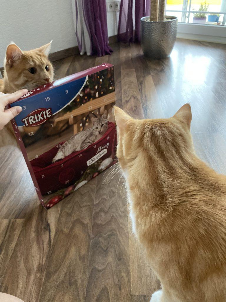 Katzen mit Trixie Adventskalender